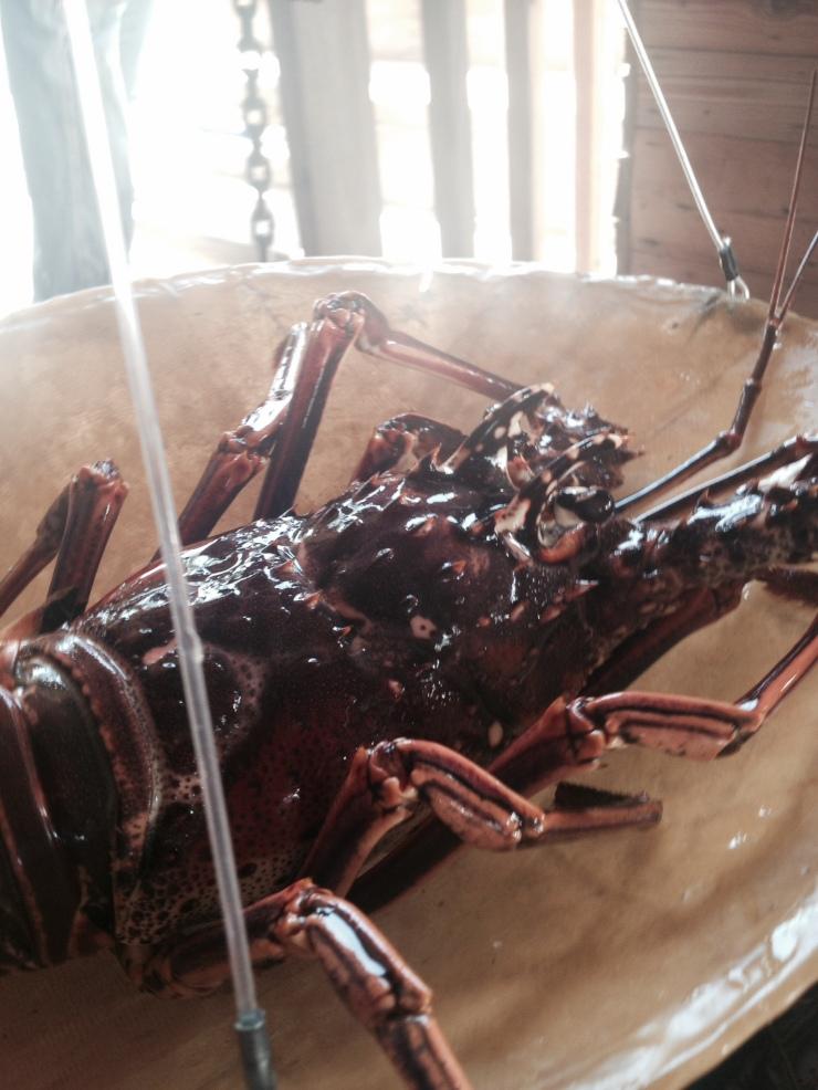 lobster lees grill st maarten